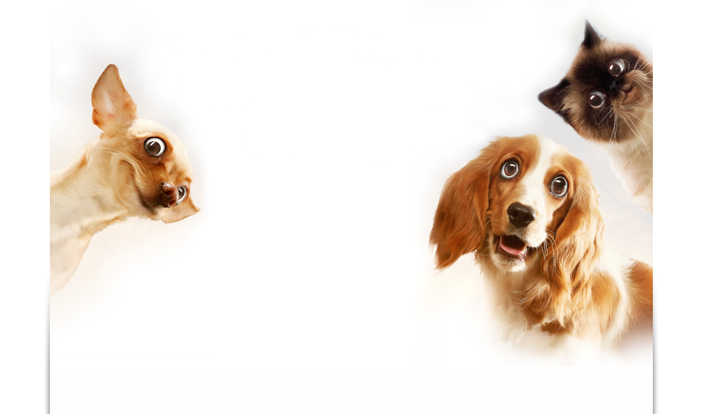 Create and Play with Your Talking Pets On-The-Go - CrazyTalk